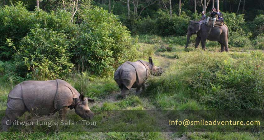 Chitwan Jungle Safari Tour Packages